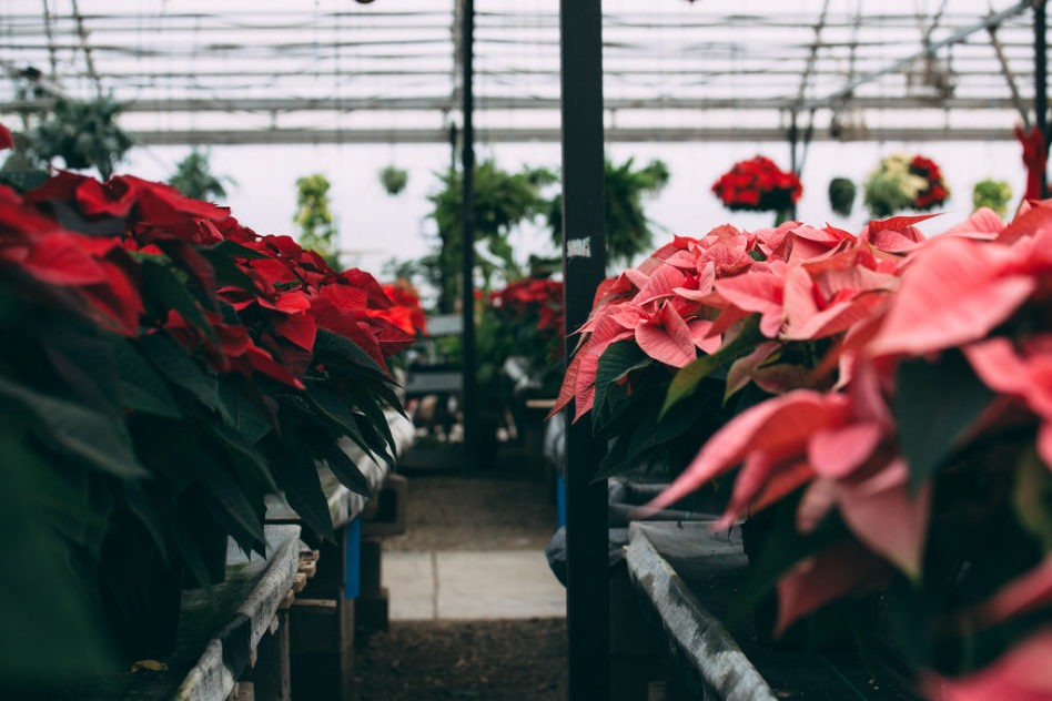 2016 Holiday Photography at Johnson Brother Greenhouse